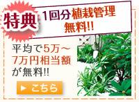 特典 一回分植栽管理が無料